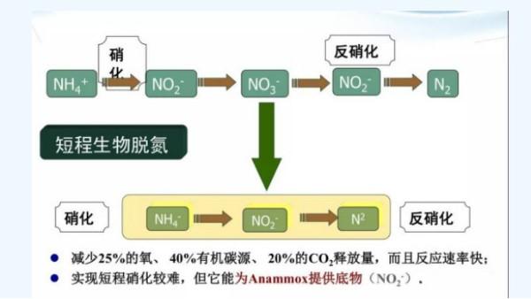 苏净分享:硝化反硝化的一些要点