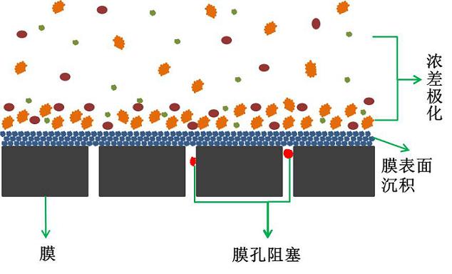 mbr膜污染