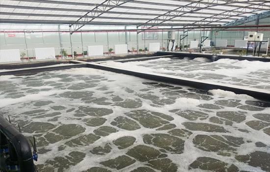 高寒地区生活污水处理技术解决方案