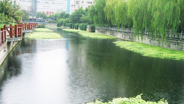 北京市航空港河段变质水体水草填料案例